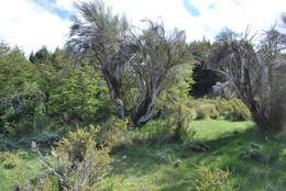 Foto Chacra en Venta en  San Carlos De Bariloche,  Bariloche  Arroyo del Medio