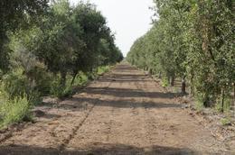 Foto Campo en Venta en  Capital Federal ,  Capital Federal  Campo y planta productora de aceite de oliva: Catamarca