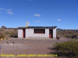 Foto Campo en Venta en  Telsen ,  Chubut  Ruta Provincial 4 - Chubut