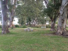 Foto Campo en Venta en  Las Flores ,  Interior Buenos Aires  Km 220 Ruta 3