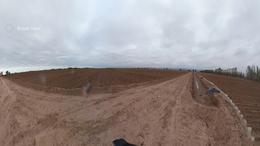 Foto Farms en Venta en  Lavalle ,  Mendoza  Ruta 40