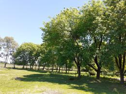 Foto Terreno en Venta en  La Lonja,  Manuel Alberti  OPORTUNIDAD! Gran predio de 17 hectáreas apto desarrollo