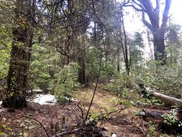 Foto Terreno en Venta en  Arelauquen,  Bariloche  Bosque del Faldeo
