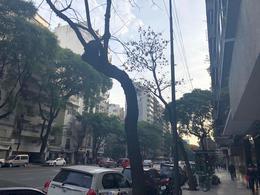 Foto Departamento en Alquiler en  Palermo ,  Capital Federal  Palermo