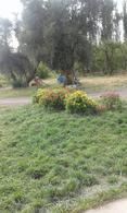 Foto Chacra en Venta en  Cervantes,  General Roca  Chacra en Cervantes - Venta o Permuta