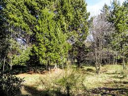 Foto Terreno en Venta en  Península de San Pedro,  San Carlos De Bariloche  Península San Pedro Calle Medioevo