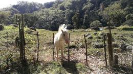 Foto Terreno en Venta en  La Pitaya,  Coatepec  TERRENO EN VENTA CRUZANDO EL RIO