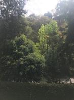 Foto Departamento en Venta en  Bosques de las Lomas,  Cuajimalpa de Morelos  Bosques del as Lomas departamento a la venta en Paseo de Tamarindos (SL)