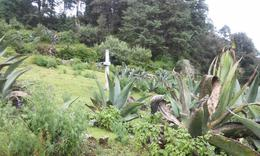 Foto Terreno en Venta en  Barrio Pueblo Nuevo,  Mineral del Monte  TERRENO ARBOLADO PUEBLO NUEVO
