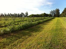 Foto Chacra en Venta en  Canelones ,  Canelones  Chacra con producción diferencial