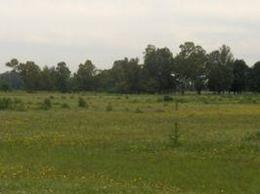 Foto Campo en Venta en  Las Flores ,  Interior Buenos Aires  Las Flores, 7 km de Villa Pardo, 220 Km caba