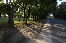 Foto Terreno en Venta en  General Belgrano,  General Belgrano  Calle 62 e/ 139 y 141 al 500