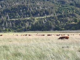 Foto thumbnail Campo en Venta en  Trevelin,  Futaleufu  Los Cipreses
