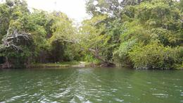 Foto Terreno en Venta en  Bacalar ,  Quintana Roo  Terreno en el Rio Hondo y Estero de Chaac