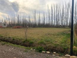 Foto Terreno en Venta en  Cipolletti,  General Roca  Ecuador al 2700