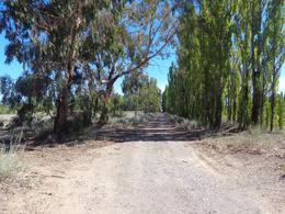 Foto Campo en Venta en  Centenario,  Confluencia  ruta 7 al 5000
