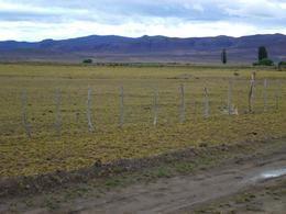Foto Campo en Venta en  Gualjaina,  Languiñeo  Rio Gualjaina
