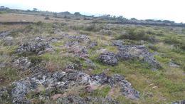 Foto Campo en Venta en  Ojojona,  Ojojona  Terreno Cerro de Hula, Carretera al Sur, Francisco Morazan