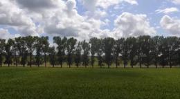Foto Campo en Venta en  Exaltacion De La Cruz ,  G.B.A. Zona Norte  Ruta 8 8