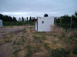 Foto Galpón en Alquiler en  Vaca Muerta,  Picunches  San cayetano 1. Amplio Galpón en Alquiler