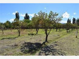 Foto Terreno en Venta en  Barreal,  Calingasta  CONFIDENCIAL