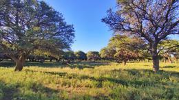 Foto Campo en Venta en  Toay ,  La Pampa  Ruta Provincial Nro 9