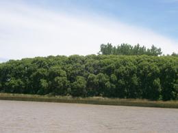 Foto Quinta en Venta en  San Antonio,  Zona Delta Tigre  San Antonio y Dientudo