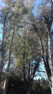 Foto Terreno en Venta en  Bosque Chico,  Countries/B.Cerrado (Pilar)  BOSQUE CHICO - PILAR