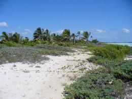 Foto Terreno en Venta en  Chetumal ,  Quintana Roo  Terreno Tampalam - Carretera Río Indio,Punta Herrero