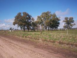 Foto Campo en Venta en  Cañuelas,  Cañuelas  80 HA. CAÑUELAS