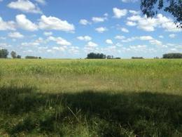 Foto Campo en Venta en  La Porteña,  Las Flores  A 5 km de R63 y 215km de CABA