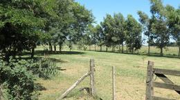 Foto Campo en Venta en  San Vicente ,  G.B.A. Zona Sur  100 Ha. TAMBO FABRICA