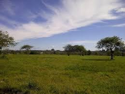Foto Campo en Venta en  Canning (Ezeiza),  Ezeiza  Ruta 16 Y 58
