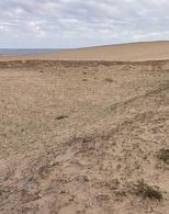 Foto Terreno en Venta en  Cabo Polonio ,  Rocha  Laguna Negra 100