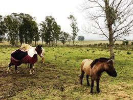 Foto Chacra en Venta en  Maldonado ,  Maldonado  Ruta 39 km 87 100
