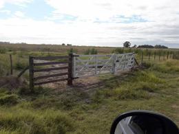 Foto Terreno en Venta en  Del Carril,  Saladillo  Ruta 205   km al 100