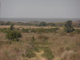 Foto Chacra en Venta en  Colonia del Sacramento ,  Colonia  Chacra de 1 ha a metros de la playa del Balneario Artilleros