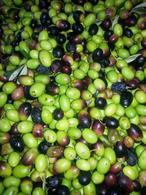 Foto Campo en Venta en  Maipu ,  Mendoza  Excelente campo con olivos y plantas elaboradoras. Aceituna. Aceite de oliva.