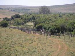 Foto Campo en Venta en  Treinta y Tres ,  Treinta y Tres  proximo a rocha