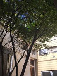 Foto thumbnail PH en Venta en  Palermo ,  Capital Federal  Arevalo al 1400
