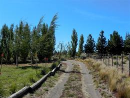Foto Chacra en Venta en  Dina Huapi,  Pilcaniyeu  Campo cercano al  Rio Limay