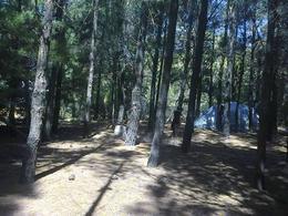 Foto Campo en Venta en  Balneario Orense,  Tres Arroyos  las retamas y algas marinas