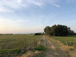 Foto Campo en Venta en  Colonia del Sacramento ,  Colonia  Riachuelo