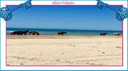 Foto Departamento en Alquiler | Alquiler temporario en  Mar Azul ,  Costa Atlantica  Chacras Del Mar