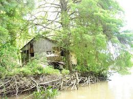 Foto Campo en Venta en  Felicaria,  Zona Delta San Fernando  Felicaria 183 ha.