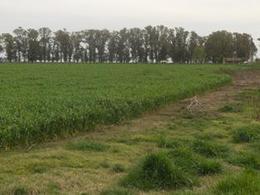Foto Campo en Venta en  Las Flores,  Las Flores  A 12 km de Ruta 3 y 224 km de CABA