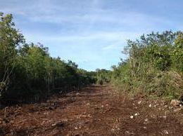 Foto Terreno en Venta en  Benito Juárez ,  Quintana Roo  Hectareas en venta, 74 o 300 muy cerca de cancun  C2646
