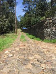 Foto Terreno en Venta en  Huasca de Ocampo ,  Hidalgo  TERRENO ARBOLADO, HUASCA HIDALGO, IDEAL PARA CABAÑAS