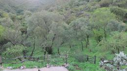 Foto Casa en Venta en  La Paisanita,  Santa Maria  Paraje Guzman 16,5 hectareas!
