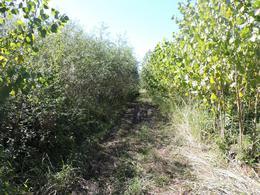 Foto Campo en Venta en  Paraná Miní,  Zona Delta San Fernando  538 ha. Paraná Miní